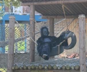 动物园腥腥竟是人扮的?