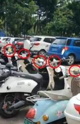 仟仟万家后面上百台电动车违停被贴罚单,在路上停电动车交警叔叔可不答应