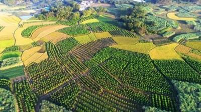 钦州灵山:柑桔产业带富一方
